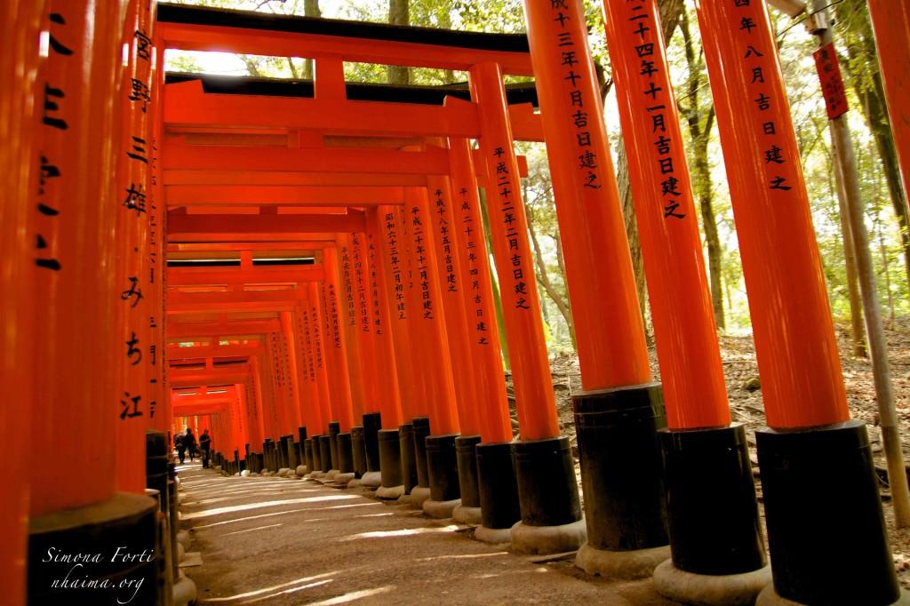 Percorso di torii rossi a Fushimi Inari